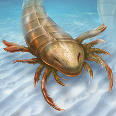 Pentecopterus lived 467 million years ago.