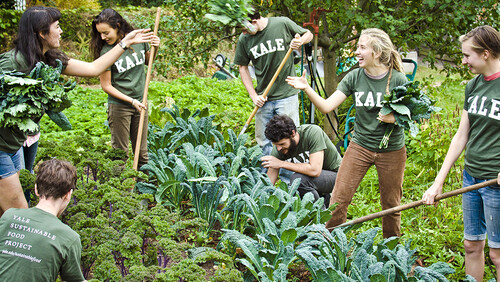 Students working on the Yale Farm in KALE t-shirts.
